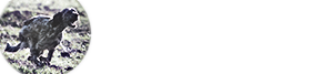 desianensis.it | Allevamento Setter Inglesi -